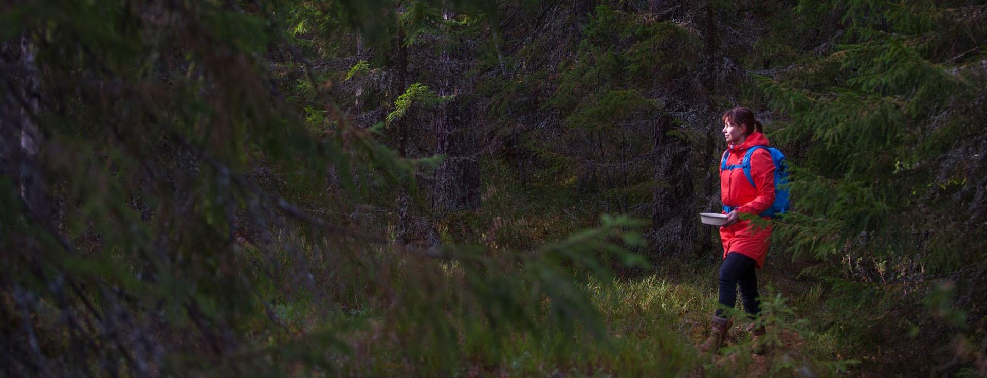 En kvinna som går i skogen och plockar bär.